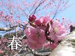 奈川村の春