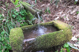 給水の湧き水